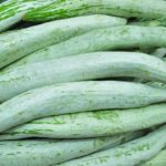 recipes of snake gourd